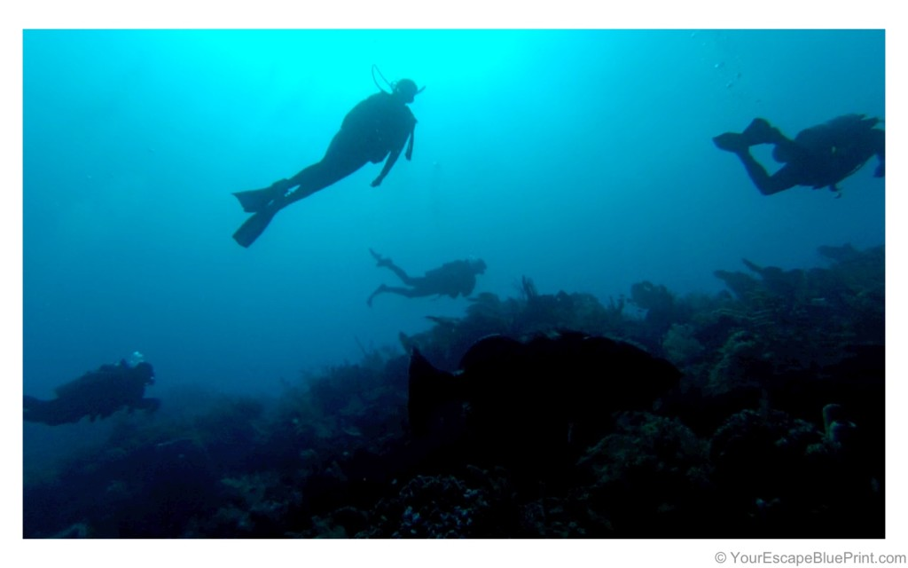 Diving the Roatan Banks