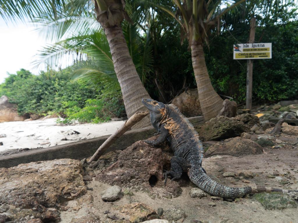 Isla Iguana-5